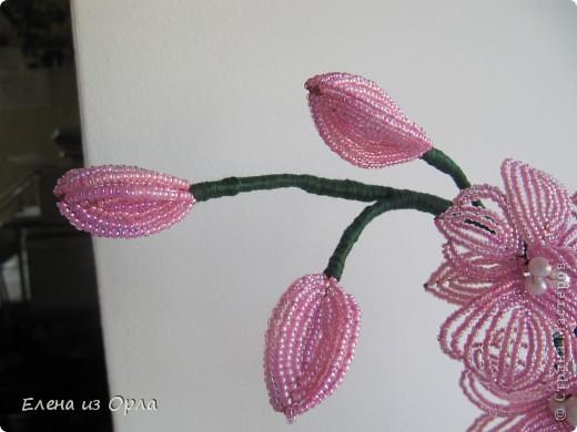 На самом деле эту орхидею я начала плести раньше, чем белую. Но так, как не хватило бисера на листики и долго не было завоза, она получилась у меня второй. Орхидея с опозданием. фото 4
