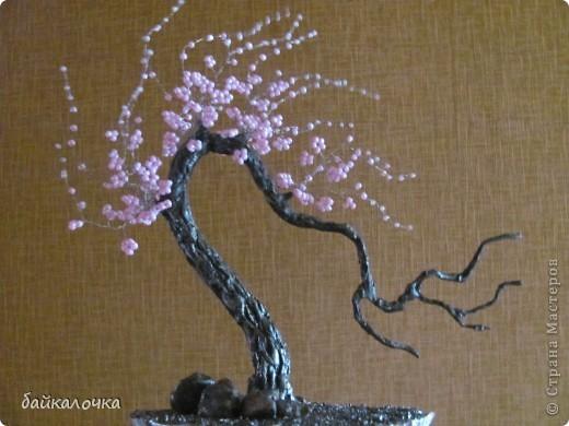 Сакура бисерная. фото 3