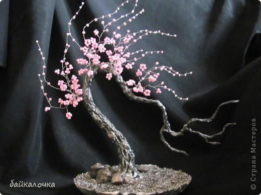 Сакура бисерная. фото 1