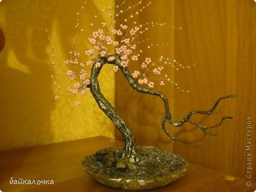 Сакура бисерная. фото 2
