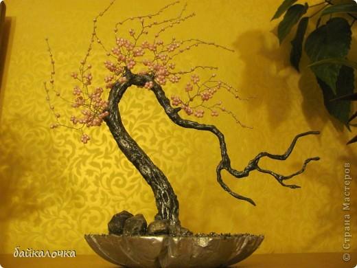 Сакура бисерная. фото 4