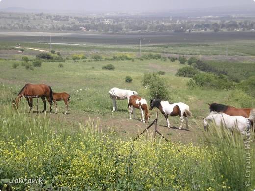 Когда я выставила фотографии моей поездки в Эйлат(в южную часть Израиля),то Оленька (Акварель) попросила меня показать и северную часть страны. Оленька,каюсь!!!!!! Только сейчас собралась,вот такая я лентяйка. Тут собраны фотографии с нескольких поездок по северной части Израиля. фото 2