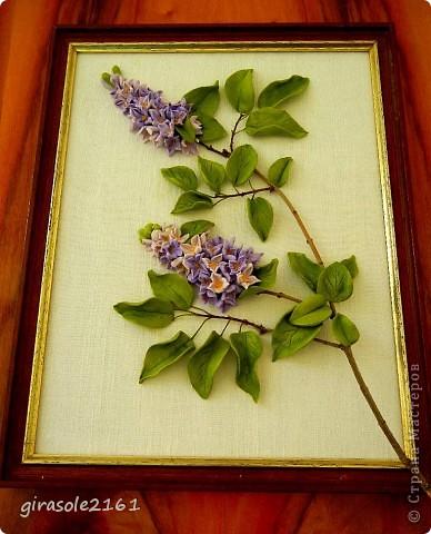 Сирень Голубая, лиловая, синяя, белая  Расцвела нынче в мае сирень.  Я хожу и любуюсь, как ошалелая  На цветущие кисти весь день.  Каждый кустик, как новое чудо встречаю,  Примагниченный взгляд оторвать не могу,  Вот опять пятилистник в цветах замечаю…  фото 5