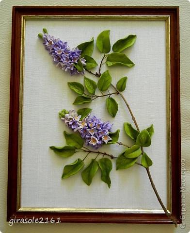 Сирень Голубая, лиловая, синяя, белая  Расцвела нынче в мае сирень.  Я хожу и любуюсь, как ошалелая  На цветущие кисти весь день.  Каждый кустик, как новое чудо встречаю,  Примагниченный взгляд оторвать не могу,  Вот опять пятилистник в цветах замечаю…  фото 1