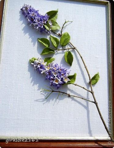 Сирень Голубая, лиловая, синяя, белая  Расцвела нынче в мае сирень.  Я хожу и любуюсь, как ошалелая  На цветущие кисти весь день.  Каждый кустик, как новое чудо встречаю,  Примагниченный взгляд оторвать не могу,  Вот опять пятилистник в цветах замечаю…  фото 4