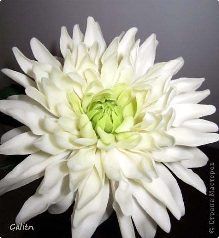 Может быть мой георгин похож на хризантему, но хотелось сделать именно такой . фото 3