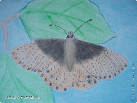 Рисовали с сыном бабочек, занесенных в Красную книгу Тверской области. Эта бабочка называется Перламутровка северная. Нарисована пастелью. фото 1