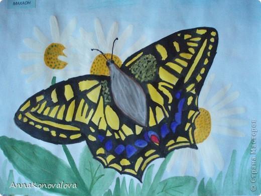 Рисовали с сыном бабочек, занесенных в Красную книгу Тверской области. Эта бабочка называется Перламутровка северная. Нарисована пастелью. фото 2