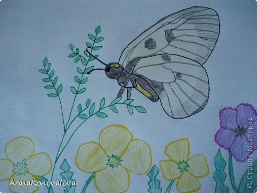 Рисовали с сыном бабочек, занесенных в Красную книгу Тверской области. Эта бабочка называется Перламутровка северная. Нарисована пастелью. фото 3