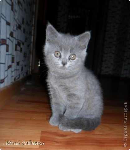 И снова коты -ключницы! фото 8