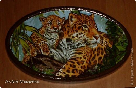тигры фото 2