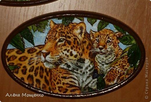 тигры фото 6