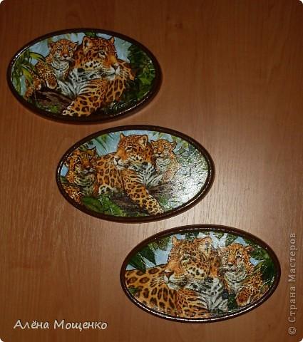 тигры фото 7
