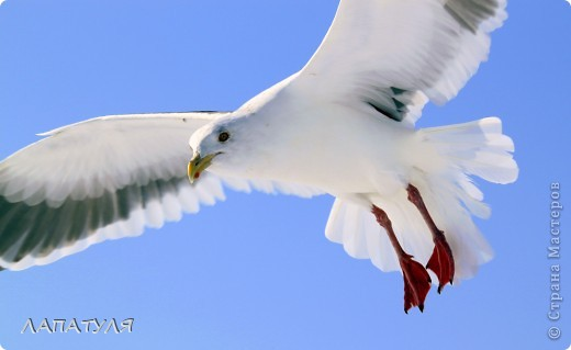 Орланы на добыче, ждут рыбку фото 6