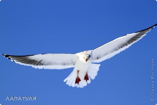 Орланы на добыче, ждут рыбку фото 8