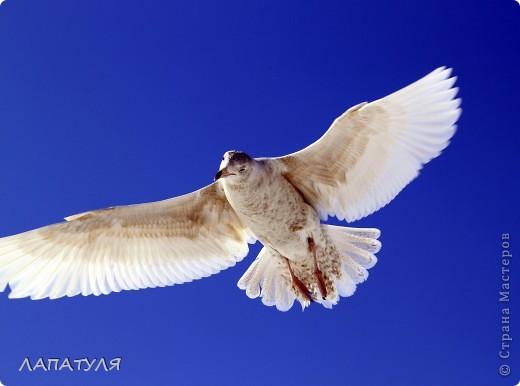 Орланы на добыче, ждут рыбку фото 9
