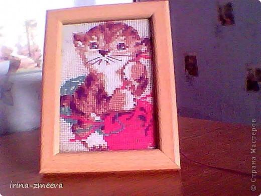 Котик фото 16