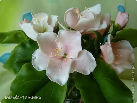Приветствую всех жителей страны! Наконец то весна, всё цветёт и пахнет, под впечатлением налепила цветочки.  Лепила яблоневый цвет, не уверена что похоже... фото 2