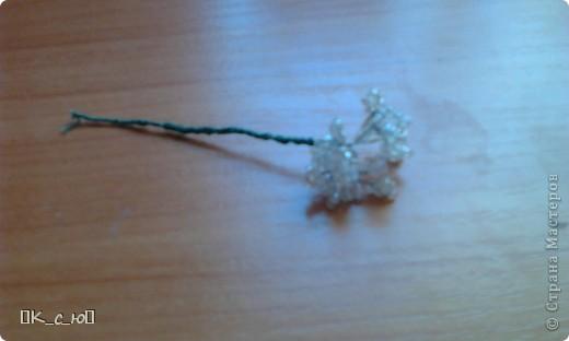 Добрый день, жителям СМ!Сегодня я хочу Вам показать мои цветы и деревца. Начнем с моего дерева счастья.(Извините за качество фото.) фото 3