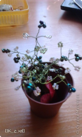 Добрый день, жителям СМ!Сегодня я хочу Вам показать мои цветы и деревца. Начнем с моего дерева счастья.(Извините за качество фото.) фото 2
