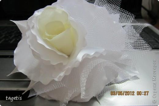 Просто розы фото 2