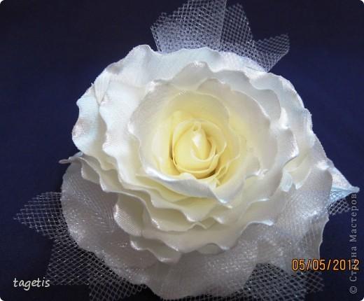 Просто розы фото 4