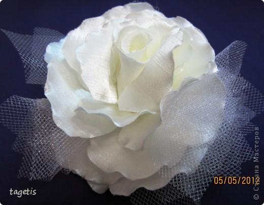 Просто розы фото 8