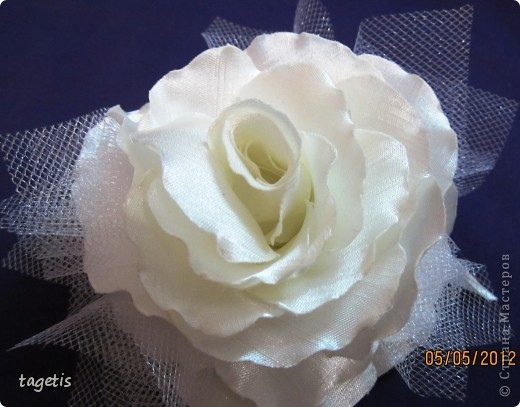 Просто розы фото 9