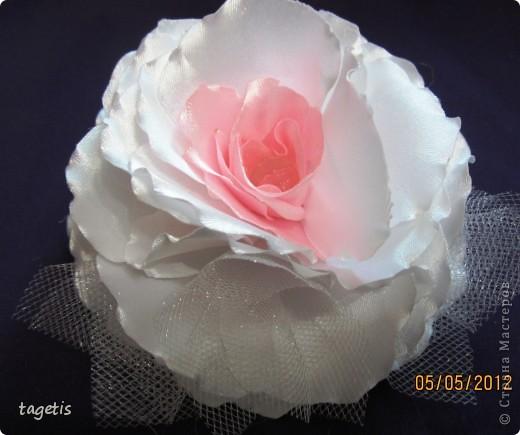 Просто розы фото 11