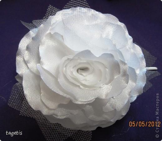 Просто розы фото 12