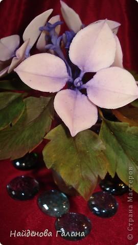 Здравствуйте,дорогие мастера и мастерицы СМ!Хочу показать Вам орхидею и гортензию. фото 5