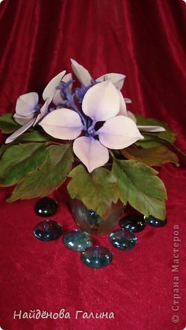 Здравствуйте,дорогие мастера и мастерицы СМ!Хочу показать Вам орхидею и гортензию. фото 4