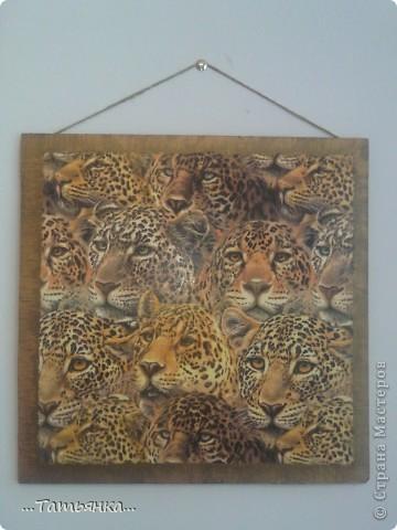 Леопардики. фото 1
