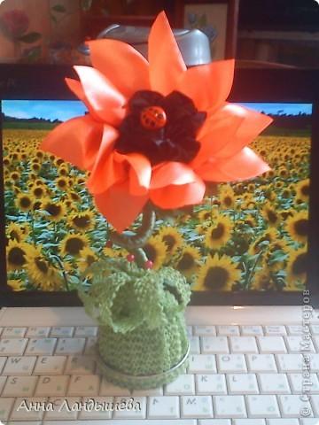 А у меня вот такие цветы-счастья! фото 4
