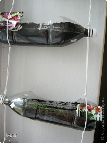 Вчера ребенок съел первый домашний огурец!!! А если бы мама их к Новому году посадила - попробовал бы на пару месяцев раньше)))  Вот так мы садим овощи на зиму и размещаем их над подоконником без ущерба мета для цветов)) фото 7