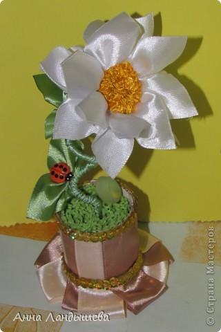А у меня вот такие цветы-счастья! фото 2