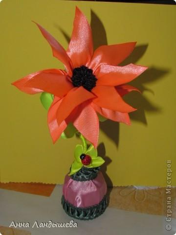 А у меня вот такие цветы-счастья! фото 5