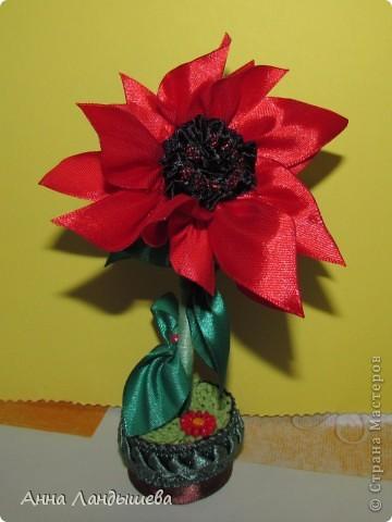 А у меня вот такие цветы-счастья! фото 6