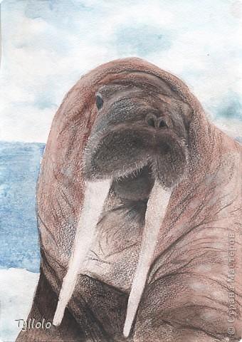 Отцу на 23 февраля. Мы, как семья дайверов, очень уважаем всех морских животных :) фото 1