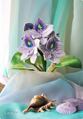 Другое название - эйхорния красивейшая. Недавно открыла для себя этот цветок и хочу представить его вам, цветочные мастерицы.   фото 1