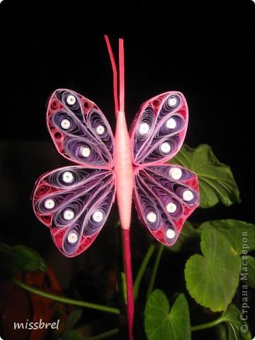 Прилетели бабочки! фото 1