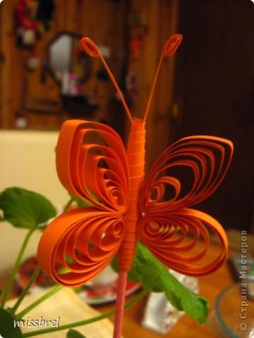 Прилетели бабочки! фото 2