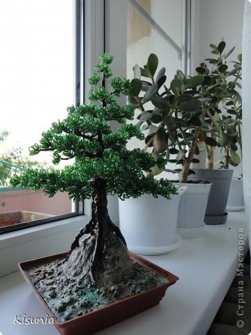 Моё первое дерево фото 4