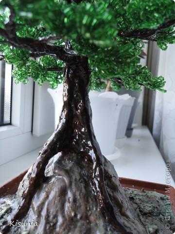 Моё первое дерево фото 6