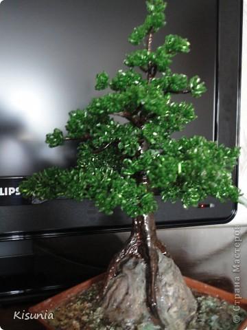 Моё первое дерево фото 2