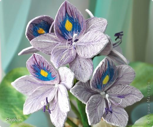 Другое название - эйхорния красивейшая. Недавно открыла для себя этот цветок и хочу представить его вам, цветочные мастерицы.   фото 2