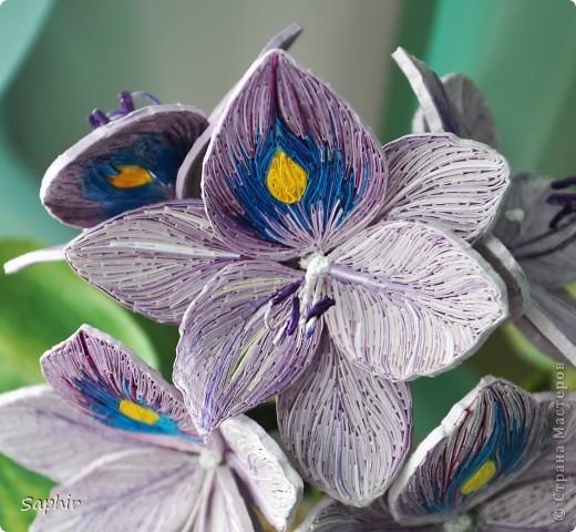 Другое название - эйхорния красивейшая. Недавно открыла для себя этот цветок и хочу представить его вам, цветочные мастерицы.   фото 3