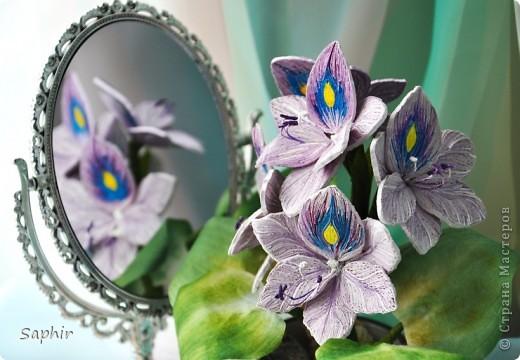 Другое название - эйхорния красивейшая. Недавно открыла для себя этот цветок и хочу представить его вам, цветочные мастерицы.   фото 7