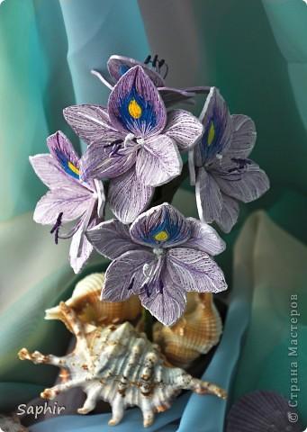Другое название - эйхорния красивейшая. Недавно открыла для себя этот цветок и хочу представить его вам, цветочные мастерицы.   фото 5