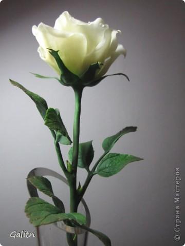 И снова роза.  Есть работы  в процессе, но очень хотелось, что то выложить ко Дню Победы. фото 2